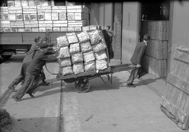 Pushing sacks of Italian potatoes, 5 May 1955