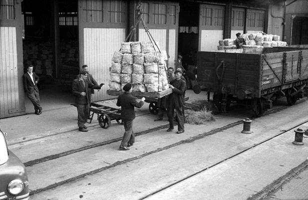 Loading Italian potatoes, 5 May 1955