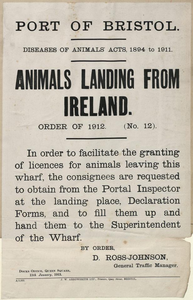 Port of Bristol Animals Landing from Ireland